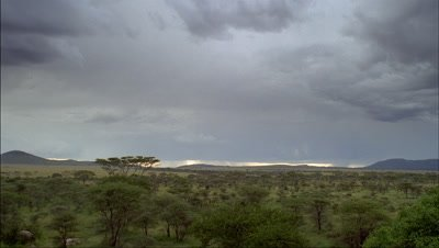Medium wide angle rain clouds showering as they move over acacia woodland and grassland with distant escarpment