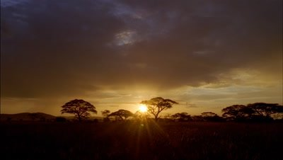 Wide angle golden sun setting behind silhouetted acacia trees