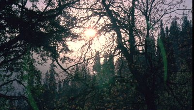 Mid shot sun rises through tree tops in forested valley in Himalayan foothills -matches RK 10277