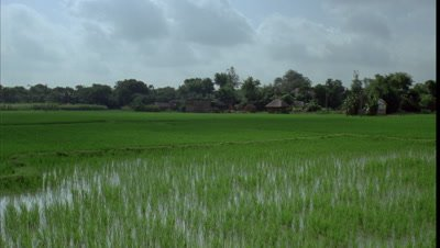 Wide angle watery rice paddy field with thatched hut village and monsoon clouds racing overhead