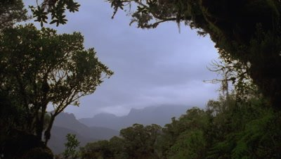 Medium wide angle view of the Peaks of the Ruwenzori Mountains framed by trees with low grey cloud boiling gently overhead