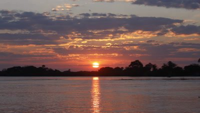 Medium wide angle purple clouds with orange sun reflected in Zambezi River sets behind silhouetted trees on riverbank, becoming dark