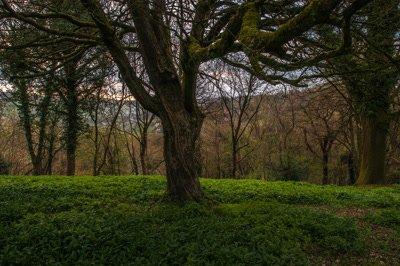 Track through deciduous woodland in Spring
