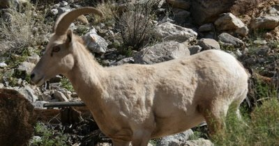 Anza-Borrego Desert Spring Wildlife and Landscape