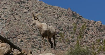 Anza-Borrego Desert Spring Wildlife and Landscape