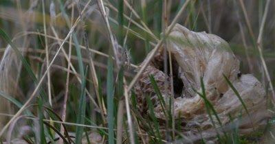 4K Snake Skin Laying in Grass
