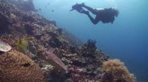 A Scuba Diver Swims Above While In The Foreground A Hawksbill Sea Turtle Feeds On Coral Reef. Camera Tracks In On Turtle Allowing Diver To Exit Frame