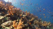 Coral Reef Royalty Free Stock Footage