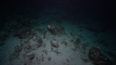 Two Nurse Sharks swimming above coral reef and disappear into the darkness of night