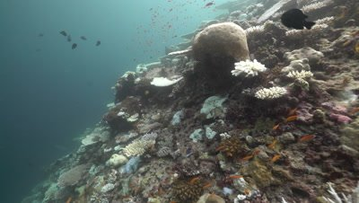 Bleached and damaged coral reef