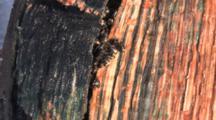 Ants, Winter Kill Inside Of Log