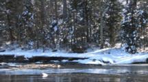 River In Spring, Ice Flowing, Winter Breakup