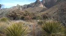 Yucca And Guadalupe Mountains
