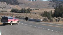 American Bison Bull Walking Across Bridge Over Yellowstone River