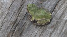 Grey Tree Frog, Turns, Exits