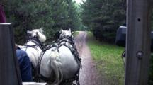 Point Of View, Riding In Wagon Drawn Through Woods By Grey And White Percheron Horses