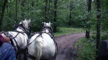 Grey And White Percheron Horses Trotting Down Wooded Lane, Pulling Wagon