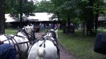 Horse-Drawn Wagon Ride On Wooded Roadway, White Horses Approaching Group Of People
