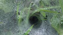 Spider's Web, Zi To Cu Of Funnel, Dew Drops