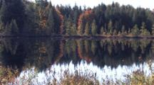 Evergreens, Tamarack, Colored Maple Reflections In Small Lake