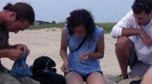 Plover Patrol Group Working, Zi To Piping Plover Chick Getting Leg Banded