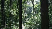 Forest, Morning Light, Slow Zoom In