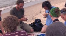 Piping Plover Patrol, Research Banding Team Working As Group, Conversing, Szo