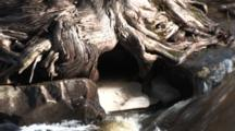 Ice Under Cedar Tree, Zoom To Caribou River Spring Runoff To Lake Superior