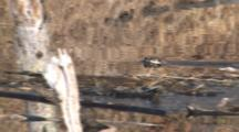 Northern River Otter Swimming In Pond Through Reflection Of Beaver Lodge