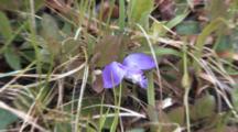 Gaywings, Wildflower Group, Zoom To Cu Single Flower