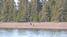 Lake Superior Beach, People And Dogs Walking Along