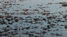 Leaves, Falling , Floating, Mirrored On Surface Of Lake, Slow Drifitng Current