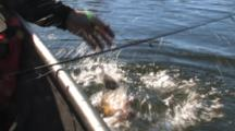 Brook Trout Fishing On Lake In Minnesota, Bringing Fish Out Of Water