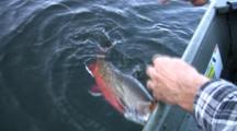 Brook Trout Fishing, Minnesota Lake, Landing Fish, Removing Hook