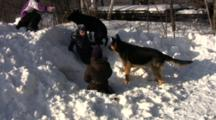 Kids And Dogs Playing In Snow, Zoom To Boy Crawling Into Snow Cave