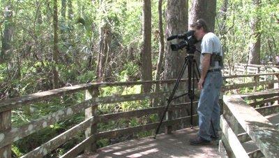 Photographer Filming from Bordwalk,Florida Swamp