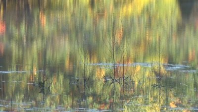 Autumn Colors on Lake,Reflections on Water Behind Bare Shrubs