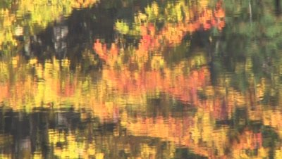 Colored Autumn Leaves Reflecting in Water Of Small Lake