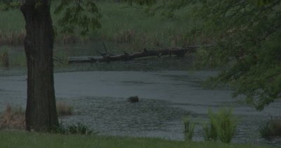 Hard Rain Falling on Beaver Pond
