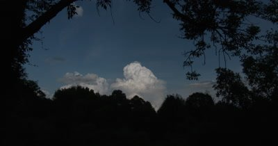 Cumuls Cloud Bank,Deciduous Trees,ZI to CU Cloud Bank with Cap Over Top