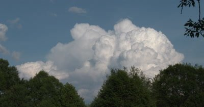 Cumulus Cloud Building,Deciduous Trees