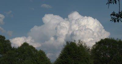 Cumulus Cloud Building,Deciduous Trees