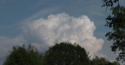 Cumulus Cloud Building,Drifting Past Deciduous trees