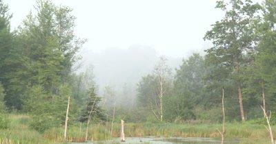 Smoke in Sky,Haze,Hanging Over Beaver Pond
