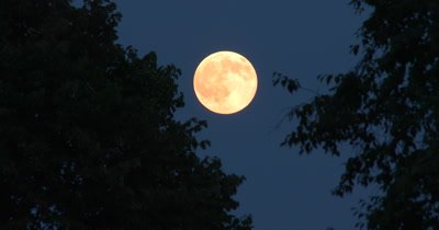 Full Moon TIme Lapse Through Treed Setting