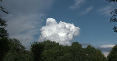 Cumulus Clouds ZO to WA Over Deciduous Trees
