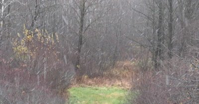 Wooded Setting,Heavy Snow Falling