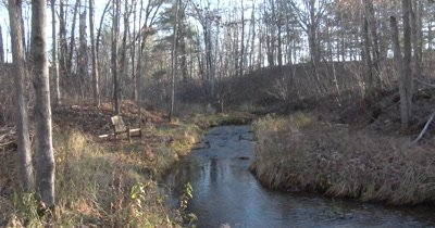 Small Creek Running Through Deciduous Woods,Bench Nearby