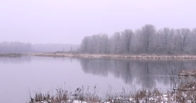 Early Spring Wetland, Goose Swimming Past, Deciduous Treeline, Reflection