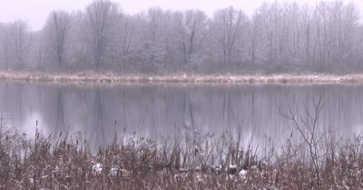 Wetland in Early Spring, Light Snow on Cattails, ZO to WA